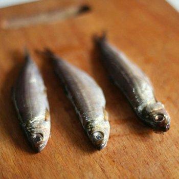 Тугун (сосьвинская селедка): описание и польза рыбы