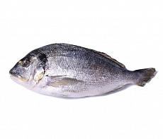 фотография Рыба
